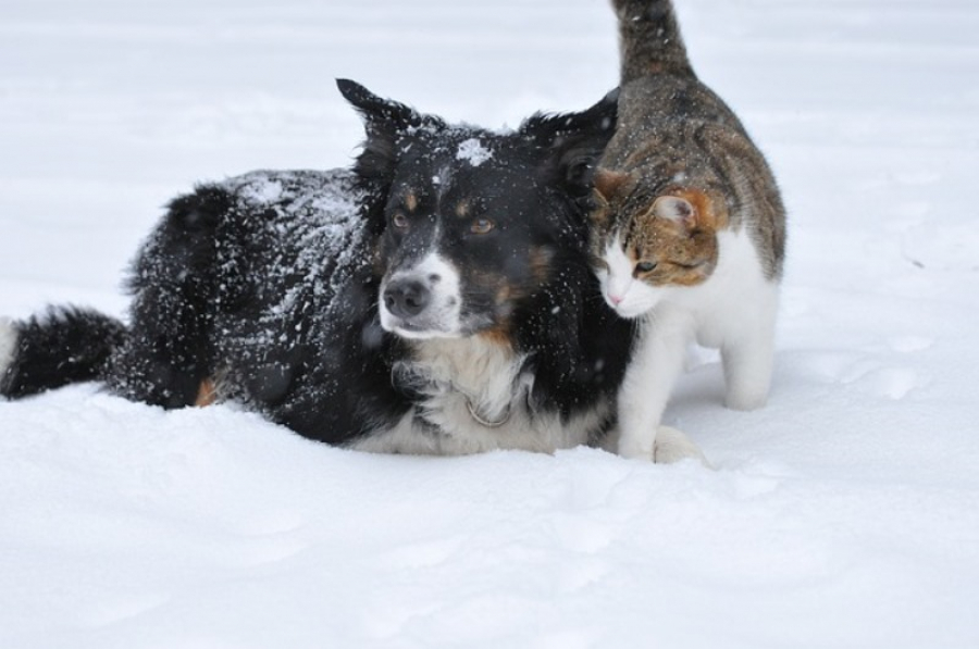 Winter thoughts about having pets